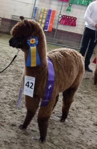 Barney brun champion 160416